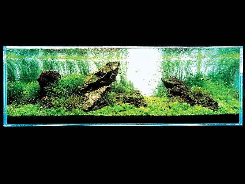аквариум Амано с блиской