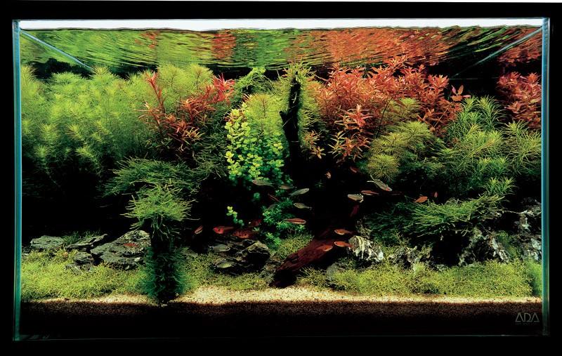 аквариум Такаши Амано с неприхотливыми растениями