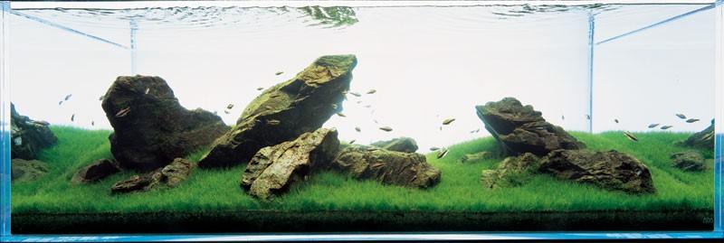 аквариум Такаши Амано с камнями