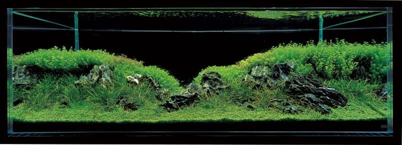 аквариум такаши амано с хемиантусом