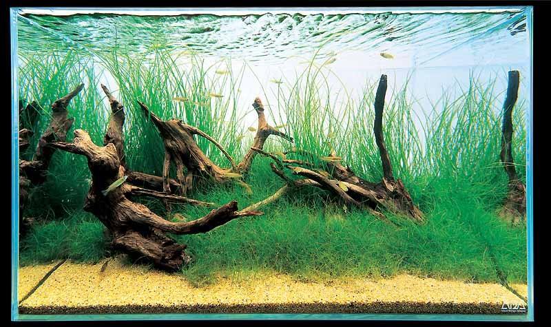 аквариум Амано с корягами