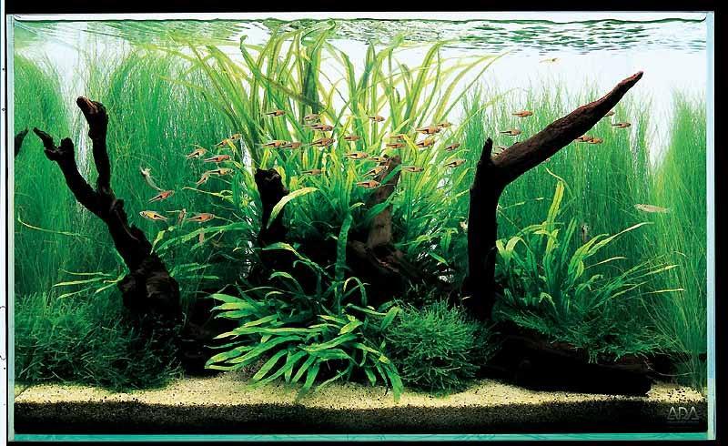 Амановский аквариум с корягами