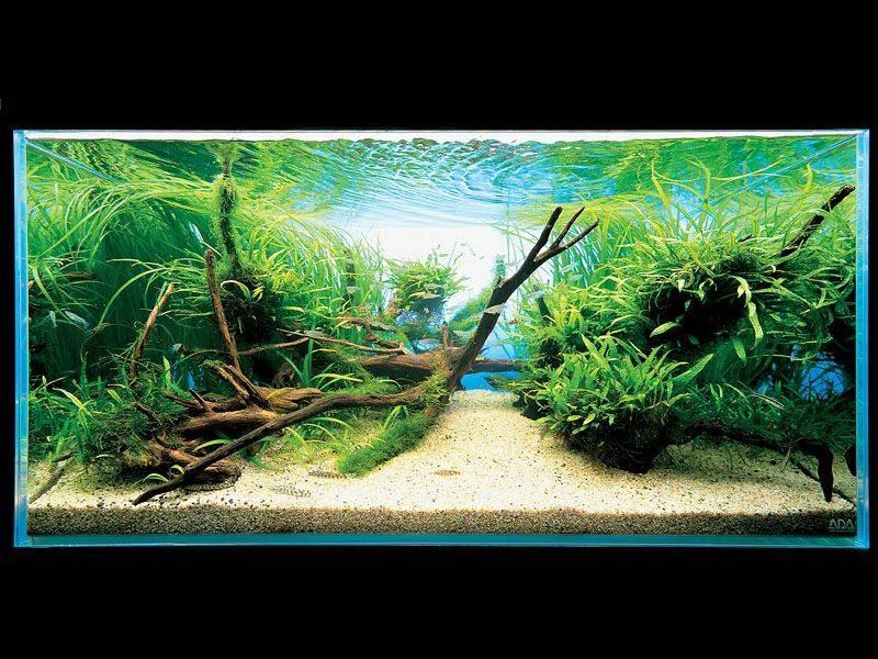 аквариум Такаши Амано с корягами