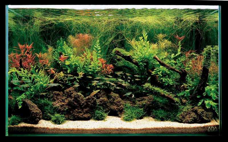 аквариум Такаши Амано с лавой