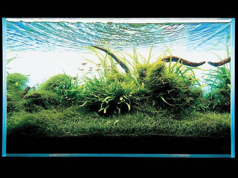 фото аквариума такаши амано