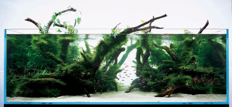 аквариум Такаши Амано с мхами