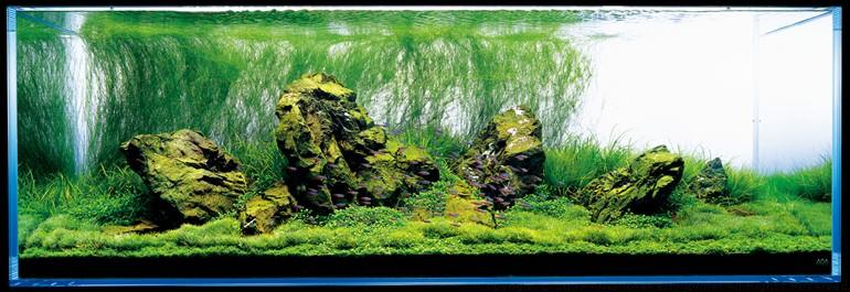 аквариум Амано красиво