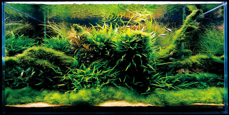 аквариум Такаши Амано где много разных растений