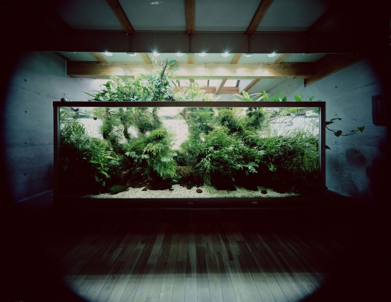 аквариум Такаши Амано в 1000 литров