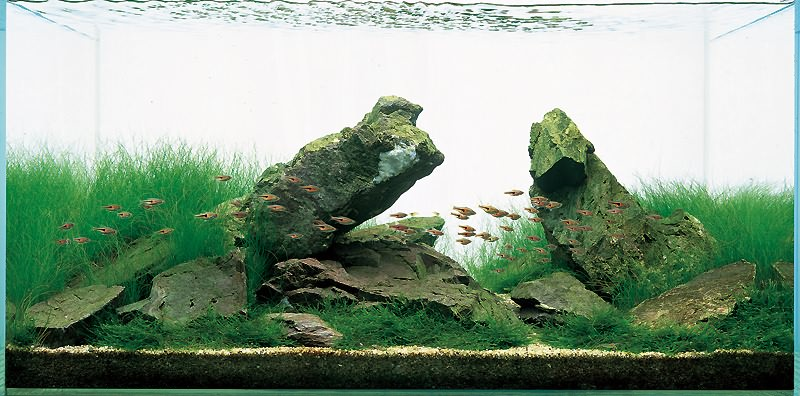Такаши Амано травник