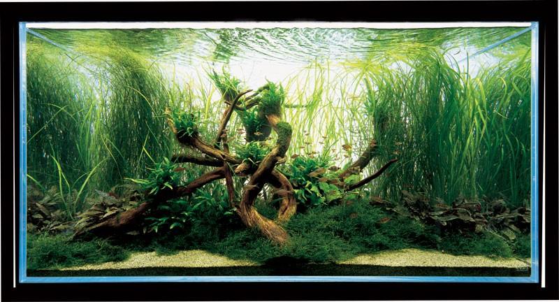 голландский аквариум Такаши Амано