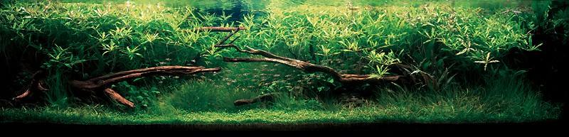 аквариум с растениями Такаши Амано