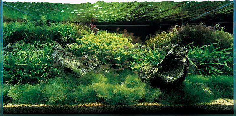 акваскейп Такаши Амано