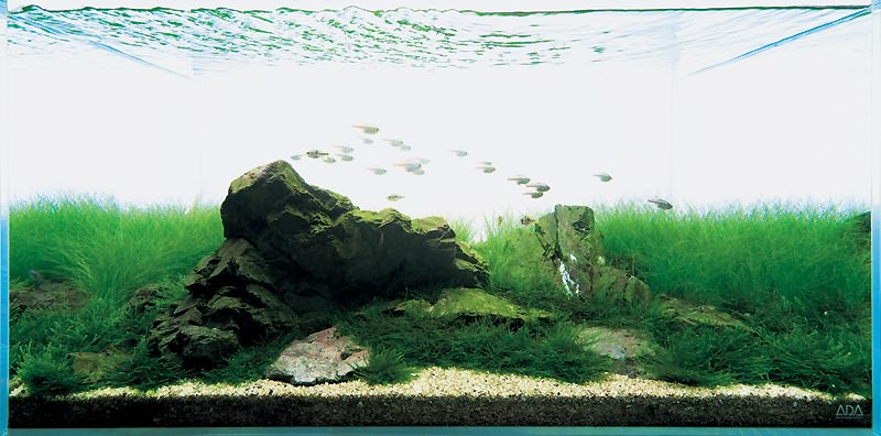 подводный мир Такаши Амано