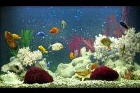 Декорации для аквариума 1