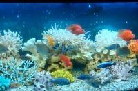 Декорации для аквариума 4