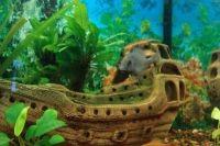 Декорации для аквариума 6