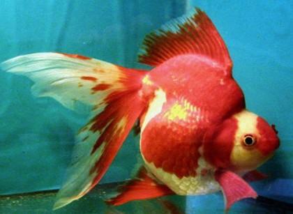 Название аквариумных рыбок