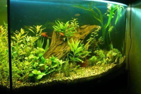 аквариум с грунтом в виде гальки