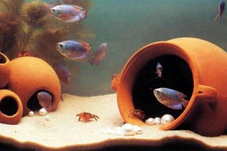 рыбки в аквариуме с грунтом в виде песка