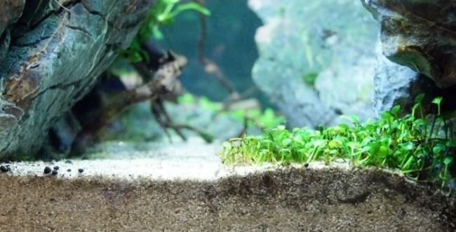 Среда для аквариумных растений.
