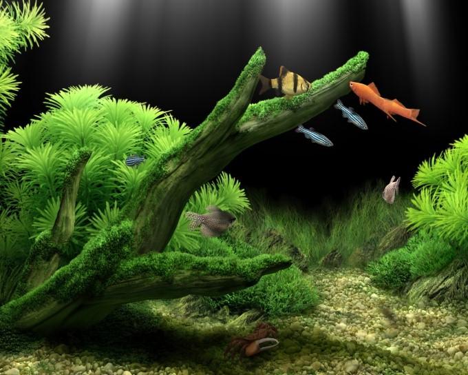 как избавиться от зелёных водорослей в аквариуме
