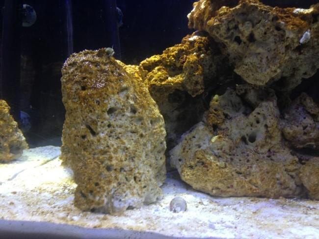 Диатомовые водоросли на камне.