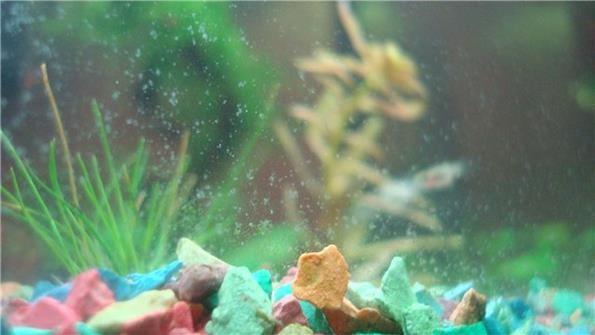 налет белый на стенках аквариума