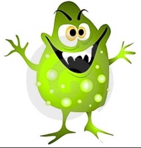 зеленая водоросль