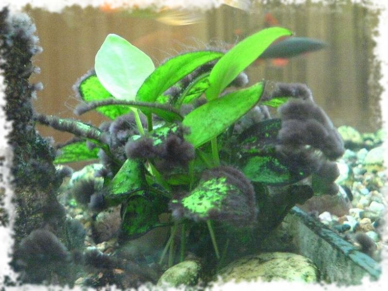 Водо�о�ли на ��енка� аква�и�ма