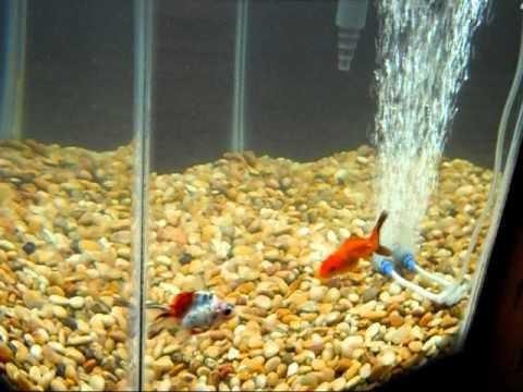 лекарство от манки у рыб