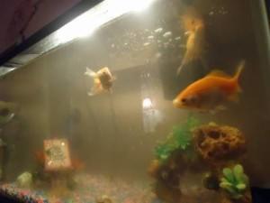 аквариум в плохом состоянии
