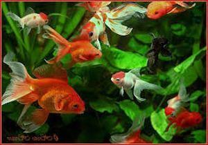 аквариумные рыбки болезни
