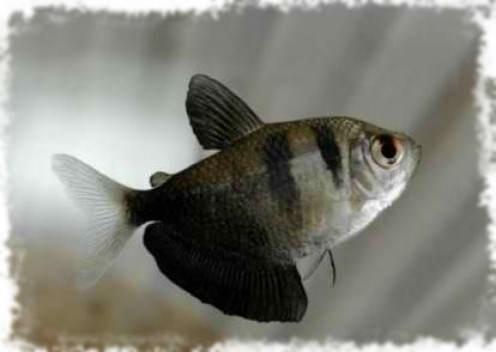самые популярные рыбки