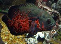 Рыбы для аквариума1
