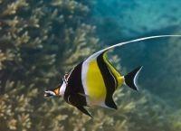 Рыбы для аквариума2