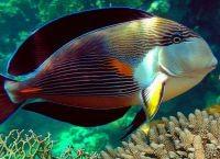 Рыбы для аквариума3