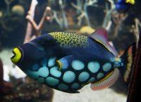 Рыбы для аквариума4