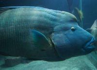 Рыбы для аквариума5а