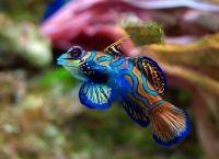 Рыбы для аквариума6