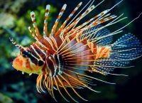 Рыбы для аквариума7