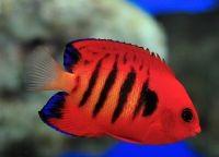 Рыбы для аквариума8