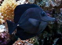 Рыбы для аквариума9
