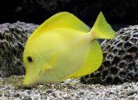 Рыбы для аквариума9а