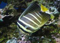Рыбы для аквариума9б