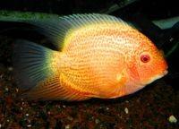 Рыбы для аквариума14