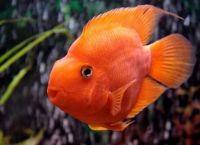 Рыбы для аквариума 14а