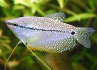 Рыбы для аквариума 19б