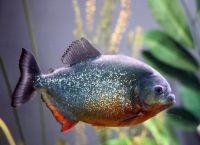 Рыбы для аквариума23