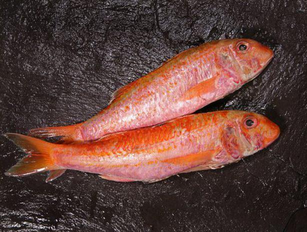 как выглядит рыба барабулька
